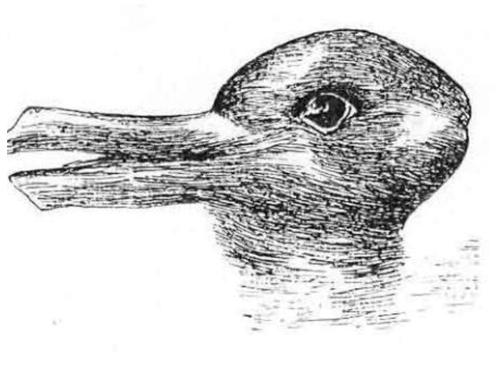 duckrabbit500